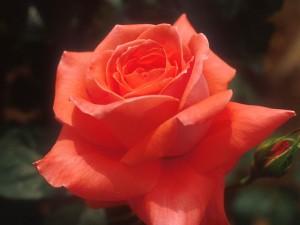 Flower1-006